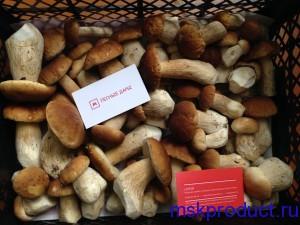 свежие белые грибы в москве