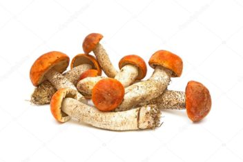 depositphotos_6078999-stock-photo-wild-mushrooms-on-a-white